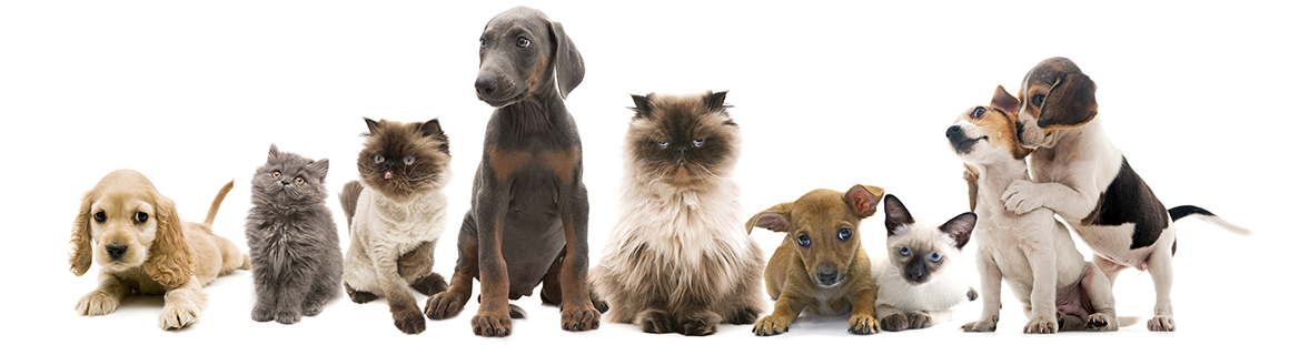 Animal Hospital in Lewisville: Pets Sitting Together