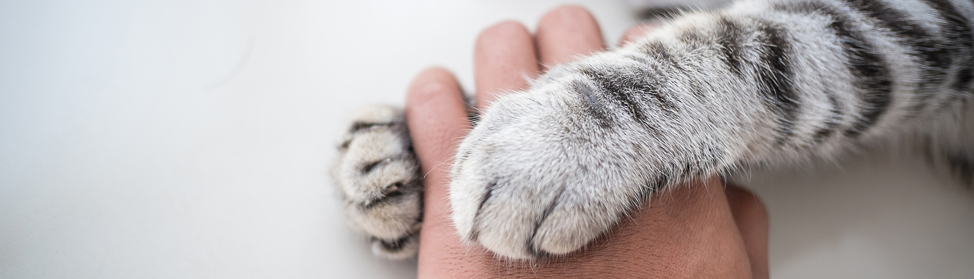 cat holding human hand