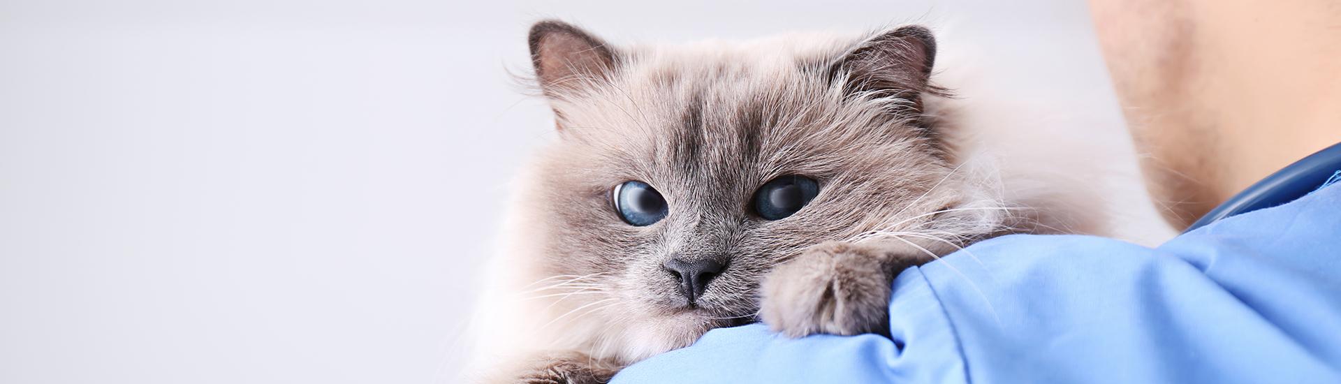 cat on vet shoulder