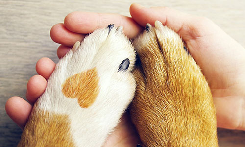 heart dog paw holding hands